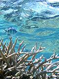 バラス沖のサンゴ