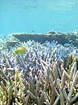 上地島の魚