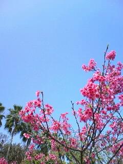 久しぶりの青空!桜もキレイ☆