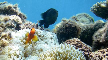 2007年8月28日の阿嘉島の阿嘉ビーチ