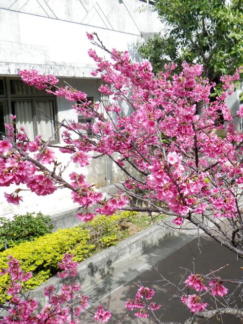 「花より団子」の花食フェス