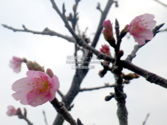 与儀公園全体で数えられるほどの花しか咲いていない