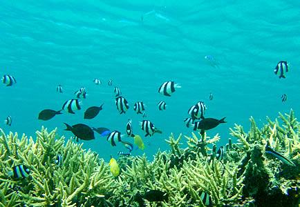 離島の熱帯魚