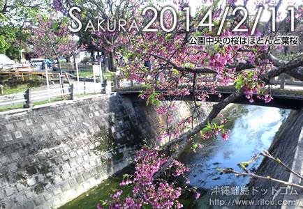 公園中央の桜はほとんど葉桜