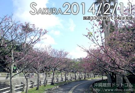 国道330号線近くの桜は見頃