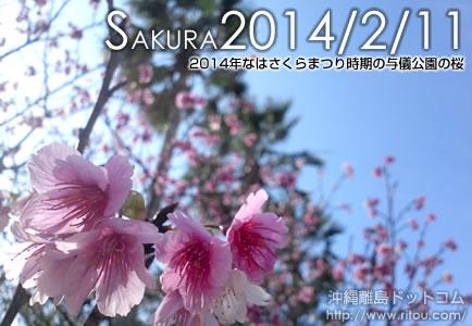 2014年なはさくらまつり時期の与儀公園の桜