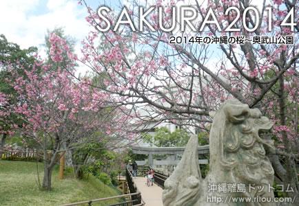 7分咲きの奥武山公園