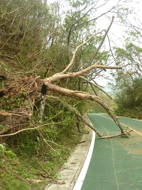 パンナ岳スカイライン北口近くの倒木