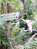 通行止めのマリユドゥの滝への道
