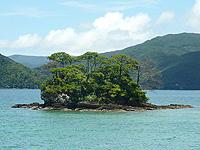 奄美大島「白浜の小島」