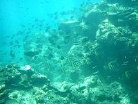 奄美大島「大浜海浜公園 海の中」
