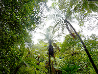 奄美大島「金作原原生林」