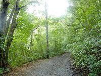 奄美大島「金作原原生林への道」