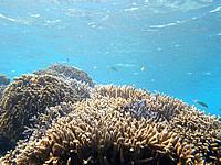 ニシ浜の海の中(八重山列島/波照間島の水中/素潜り/ダイビング)