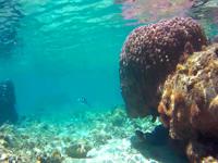 加計呂麻島「徳浜海岸インリーフ」