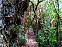 喜界島「荒木鍾乳洞/大岩」