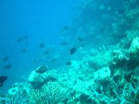 新城ビーチの海の中(新城海岸)(宮古列島/宮古島の水中/素潜り/ダイビング)