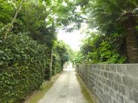 請島「大山登山口への道」