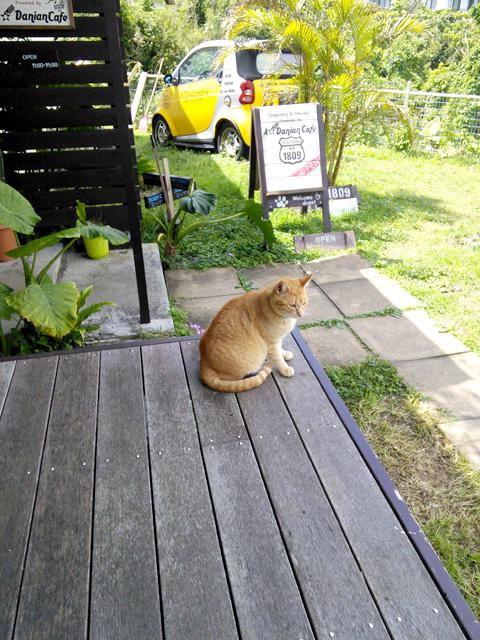 外のテラスで食べると看板猫がやってくるかも?