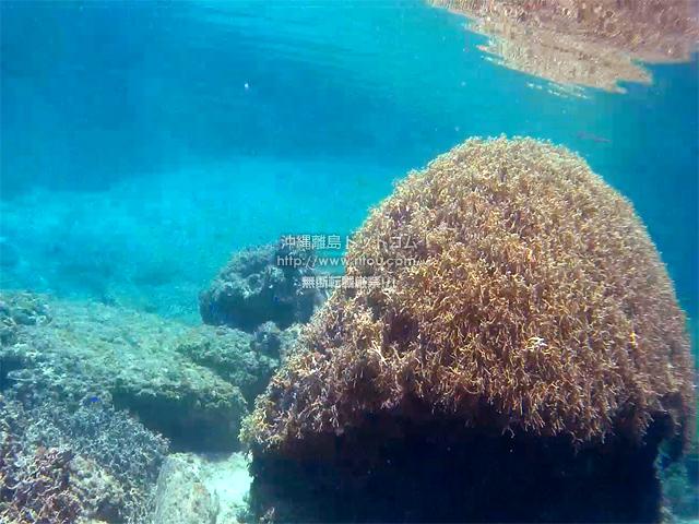 タケノコ珊瑚礁