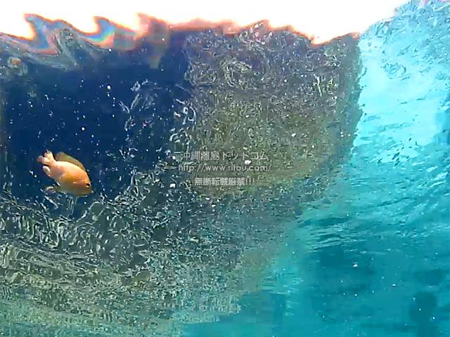 背後カメラで水面と黄色い魚