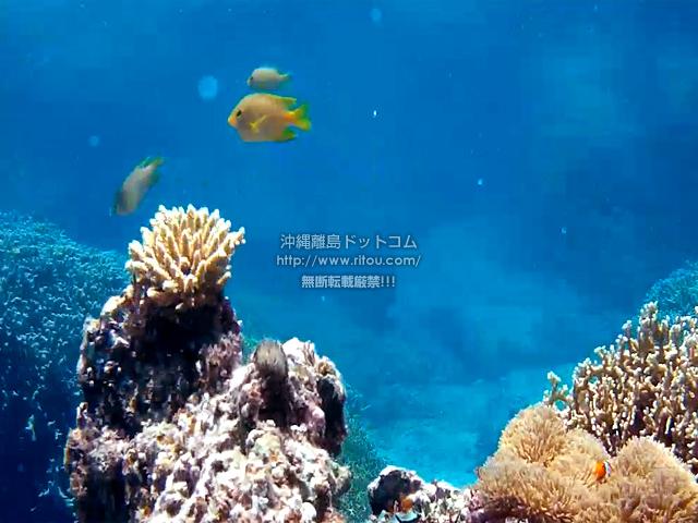 珊瑚と黄色い魚