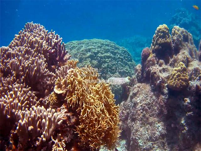 生き生きした珊瑚礁