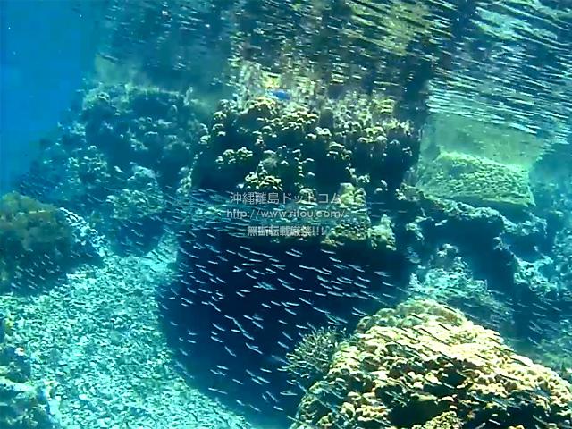 背後カメラで水面と小魚の大群