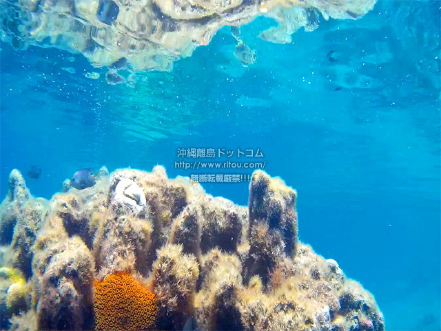 輝く水面とカラフルな珊瑚礁