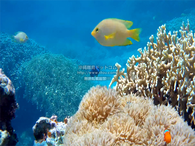 熱帯魚たちの楽園