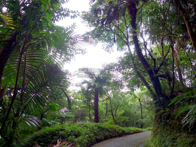 名瀬市街なのに亜熱帯の雰囲気を味わえる場所