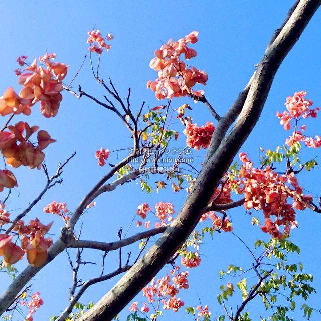 よく分からないけど綺麗な高木の花