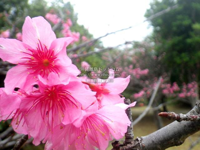 イベント会場脇の神社の桜が咲いていた