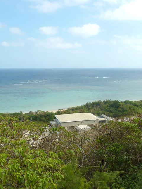 【宮古島】半年経っても進捗なし。クマザのテノヒラ。
