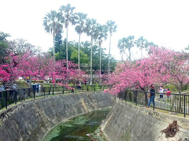 与儀公園内の桜は満開