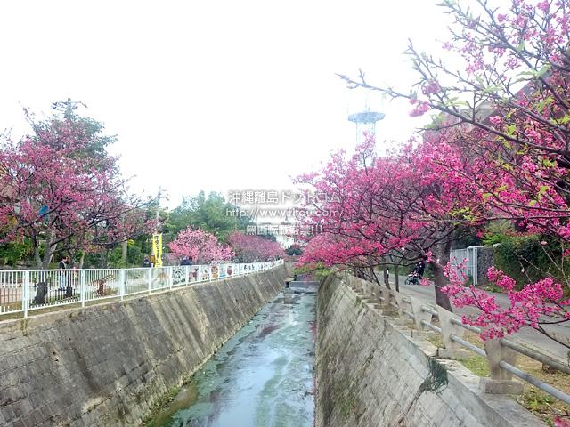 公民館と図書館の間の桜も満開