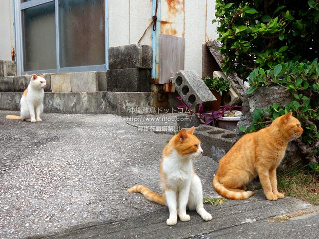 白系と茶系の猫しかいない