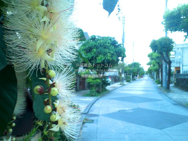 瑞泉/馬場通りのサガリバナ