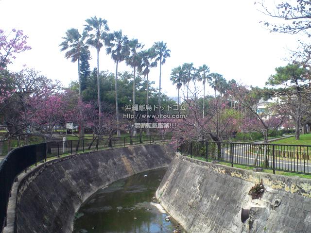 与儀公園の桜もこれが限界