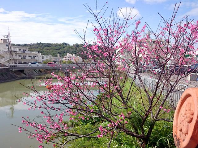 2月7日の桜