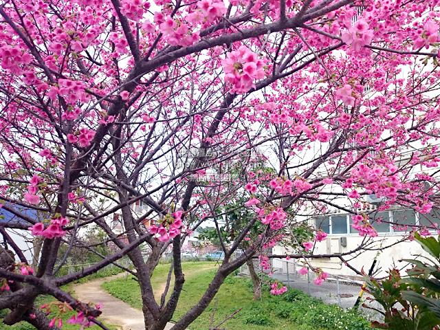 満開の桜も!?
