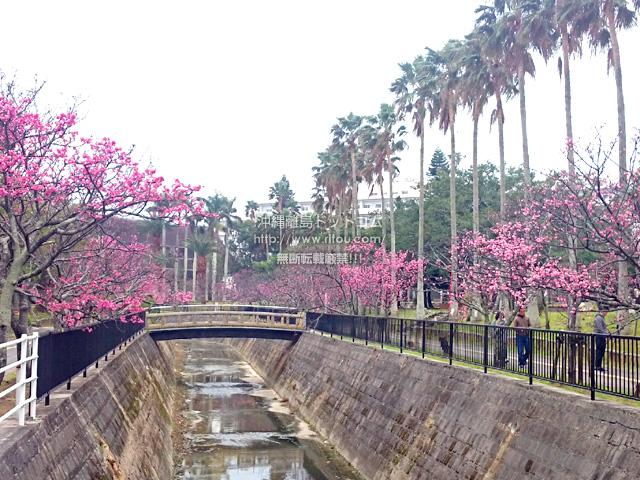 2月11日の与儀公園の川