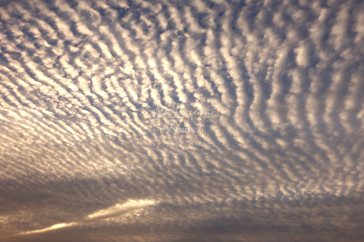 夕焼け前のうろこ雲!これも綺麗だった!!