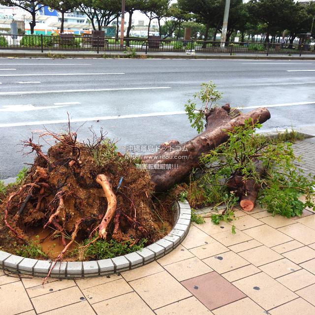 倒木も道路を塞ぐ部分はすぐ切除