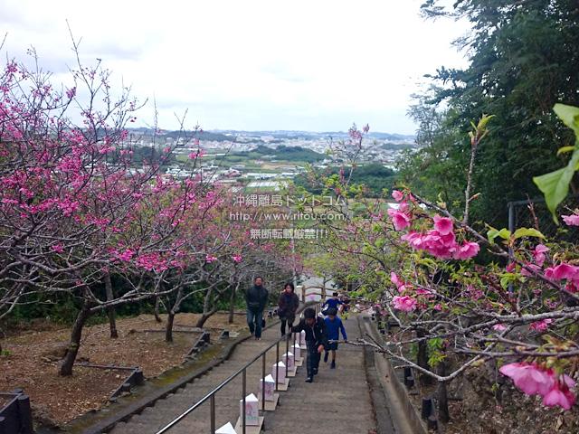 八重瀬岳中腹からの景色