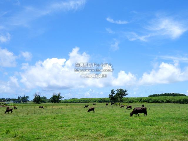 黒島の黒島の草原