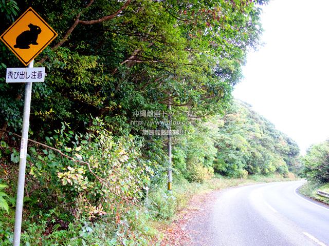 奄美大島の網野子峠/クロウサギに注意/旧国道58号線