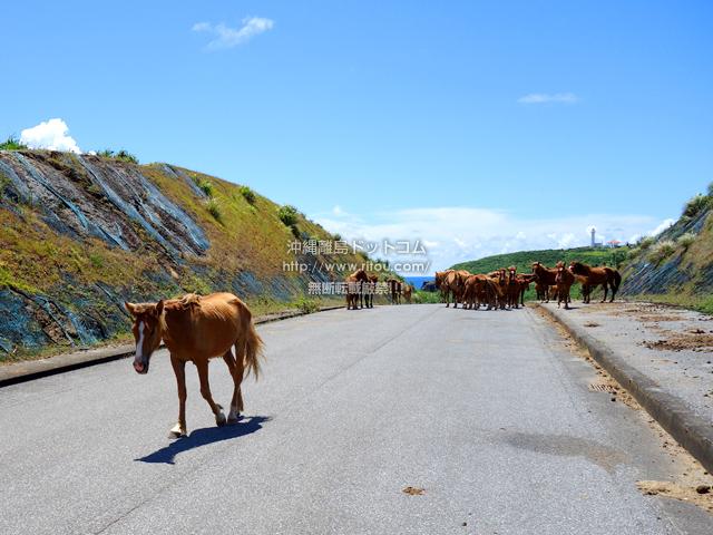 与那国島の南牧場線/Dr.コトーのタイトルバックの道/自衛隊基地整備