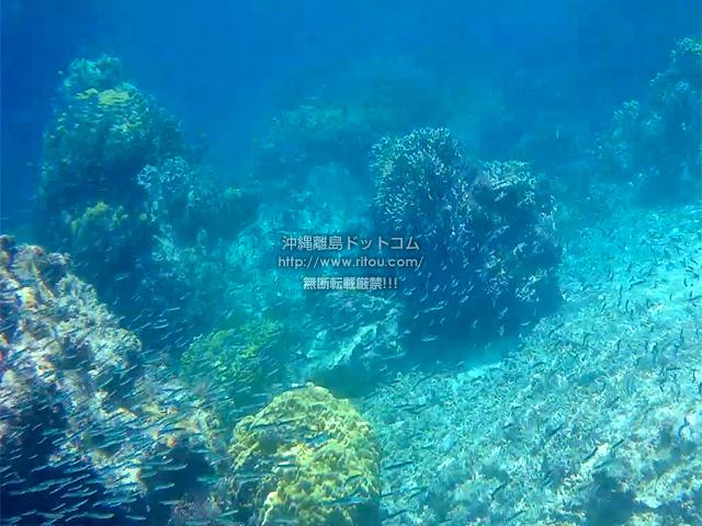 阿嘉島のニシ浜の海の中