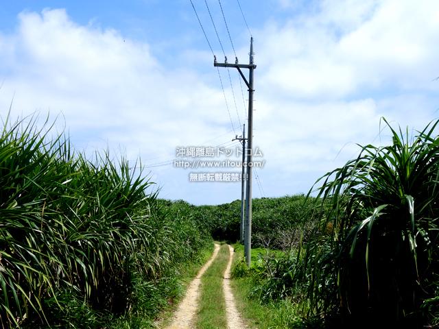 鳩間島の島の北へ抜ける道/島内陸の道/リサイクル施設
